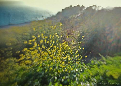 ocean lensbaby landscape mustard wildflowers florabella lesbrumes