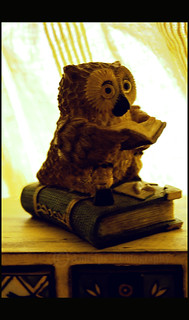 The Belgian Wise Owl ..