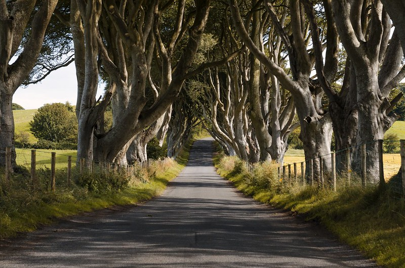 Dark Hedges #2