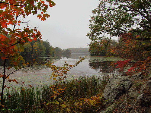autumn trees mist lake fall water leaves canon reflections pond fallcolors foggy powershot foliage waywayandastatepark sx150is smack53