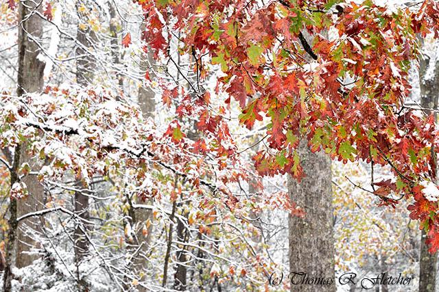 Autumn Snow Monongahela National Forest