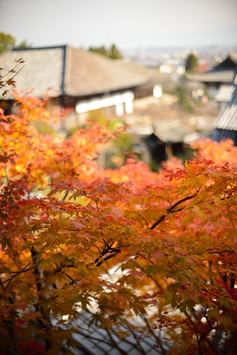 Autumnal leaves of Taima-dera temple No.2.