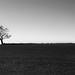 Small photo of Solitude