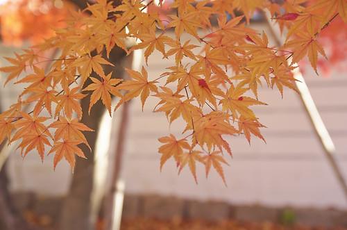 【写真】2013 紅葉 : 妙顕寺/2020-11-01/IMGP4142