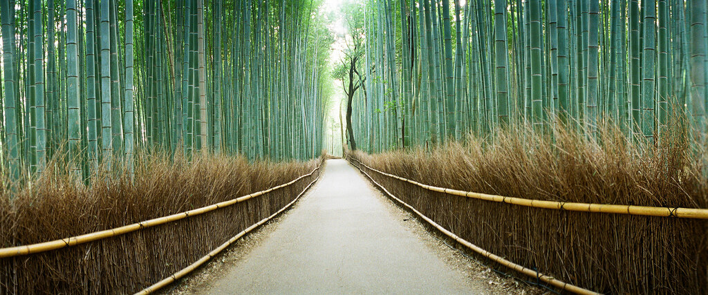 嵯峨野竹林 -bamboo thicket in Kyoto