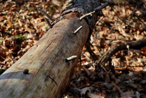 tree spikes-001