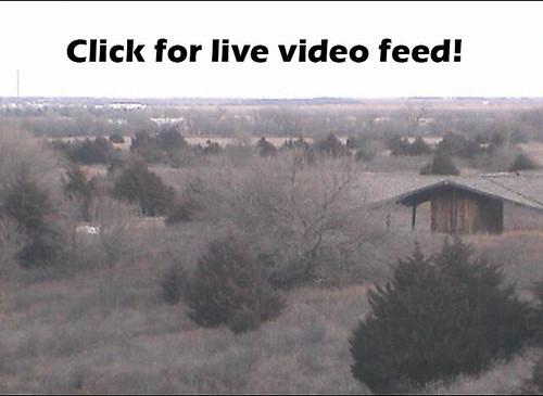 Live video feed still shot