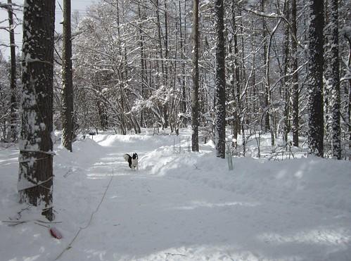 雪掻き後のアプローチ 2014年1月9日11:03 by Poran111
