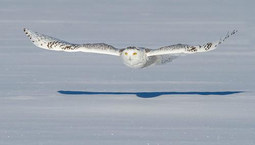 Snow Glider