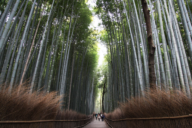 TGS enters the bamboo forest (Kyoto, Japan)