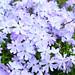 Flowers by Jawn_Cheyne