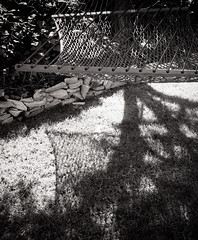 Backyard Shadows