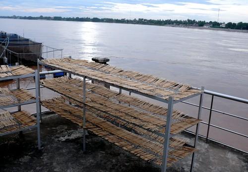 שיפודי עץ מקורצפים ומונחים לייבוש לפני שימוש חוזר