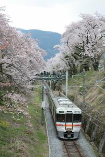 御殿場線 山北の桜