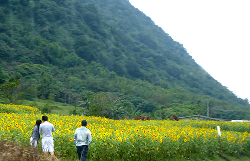 Taiwan-Taitung-Hualien-Route 11 (165)