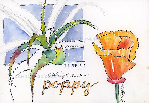 california poppy_LaFazio