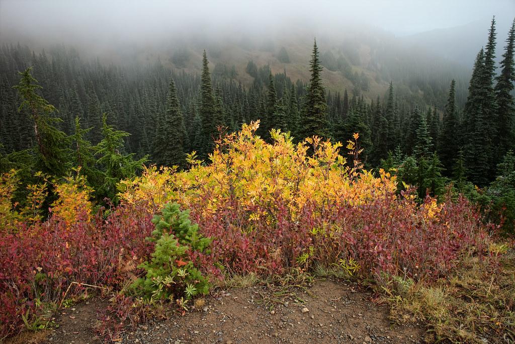Fall color at Hurricane Ridge
