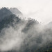 Cloud enshrouded mountain and pine trees by koalie