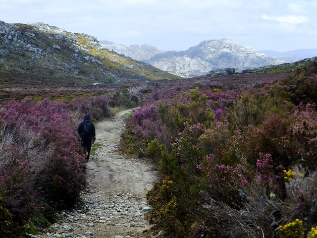 Caminando entre brezales