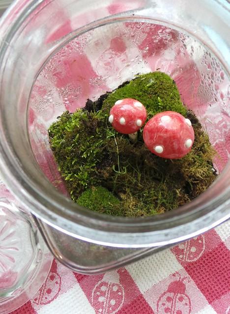 Peek inside my mossy terrarium