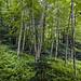 birch by cbonney