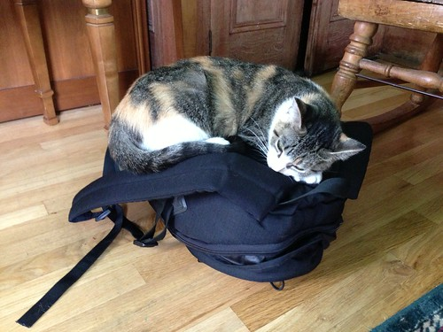cat nap on new school supplies