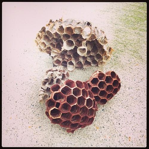 ハチの巣が良く出来るらしく。芸術的。