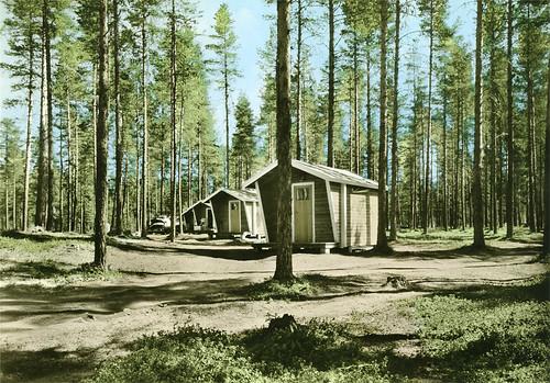trees woods riksantikvarieämbetet theswedishnationalheritageboard