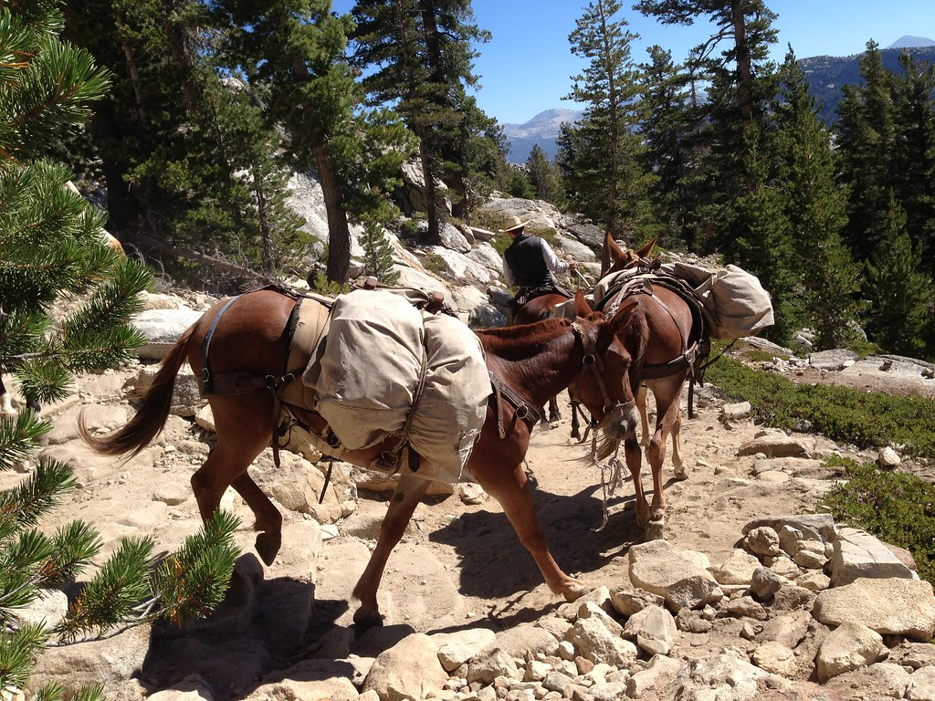 Pack horses descending from High Sierra Camp at May Lake Outside Found Adventure Bucket List