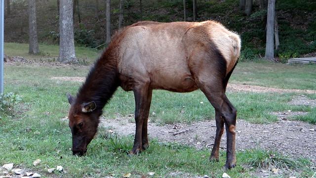 DSC06635 240813 Lone Elk Park