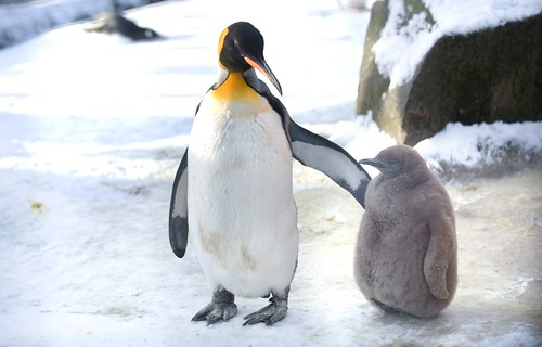 Empire Penguins, Edinburgh Zoo