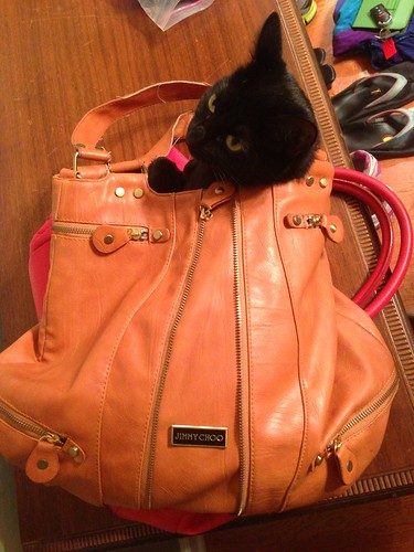 Ava & Her Love of Bags