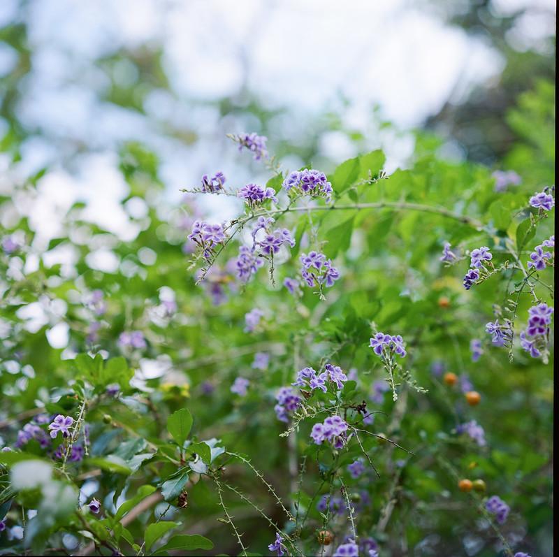 Rolleiflex_2.8_KodakPortra400-3