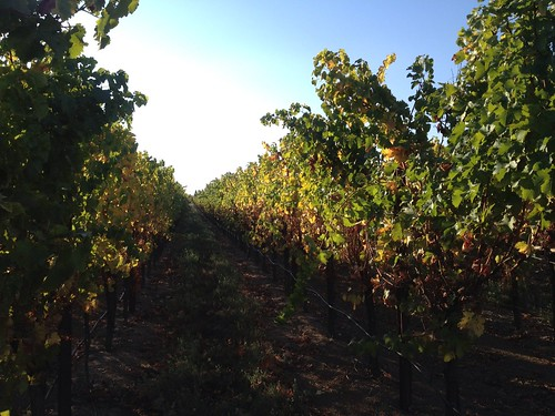 Comstock Family Vineyard