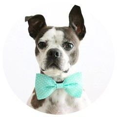 Mint Dog Bow Tie