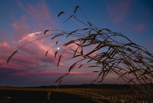 sunset moon nature grass rural evening weeds country grasses dried cattail jennifermacneilltraylor jmacneilltraylor jennifermacneill jennifermacneillphotography