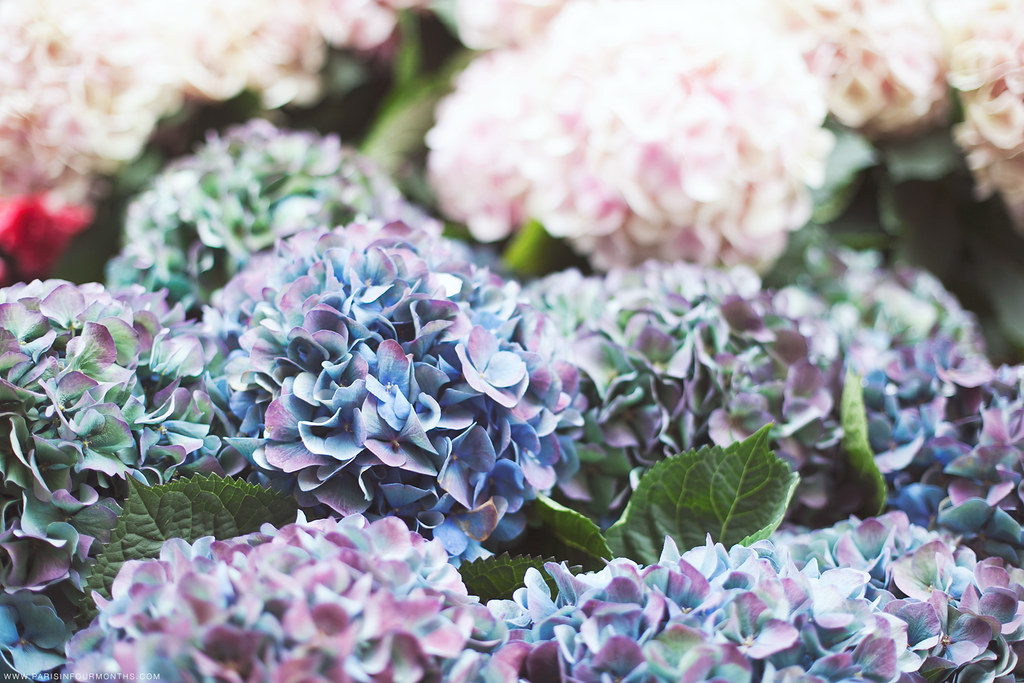 Beautiful flowers, photo by Carin Olsson of Paris in Four Months