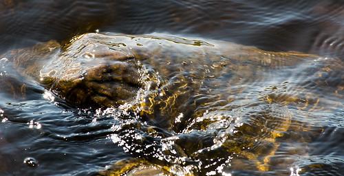 summer nature water ripples