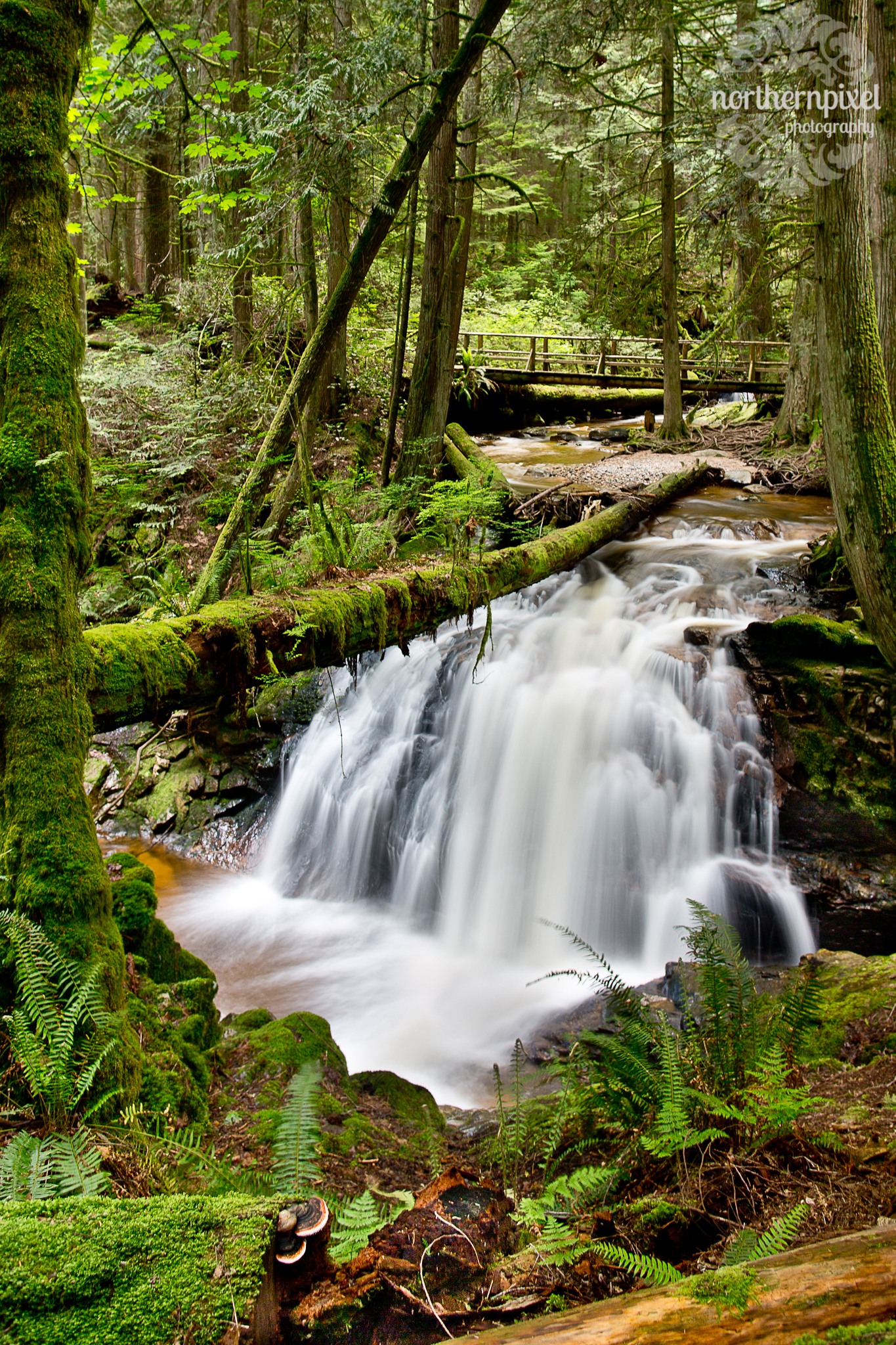 Coastal Waterfall Park Sechelt BC Photographer