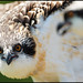 MD Osprey Chicks