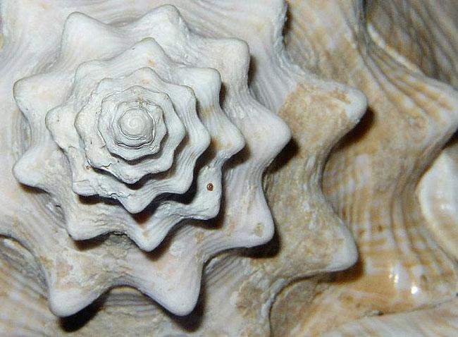 nature-patterns-007