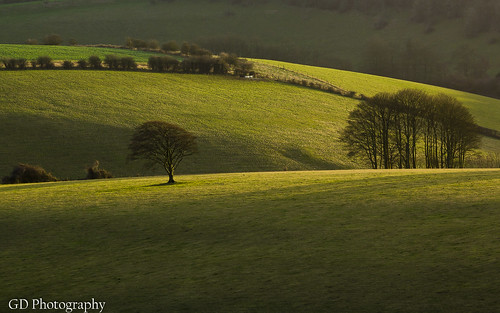 uk light england tree green grass lines rural downs landscape sussex countryside britain south country hill gb fields agriculture rolling southdowns
