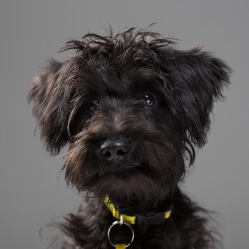 dogs rehoming gallery