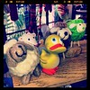 "@GeoDuckie with Sheeps in ""Really Knit Stuff"" Tally, Fla Missing #ShauntheSheep"