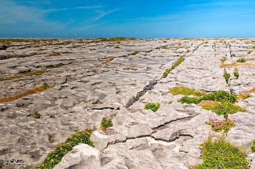 ireland landscape eire burren paysage limerick irlande countyclare sigma2470mm june2010 janeykay nikond300s juin2010