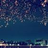 降ってくるみたいに桜咲いてた