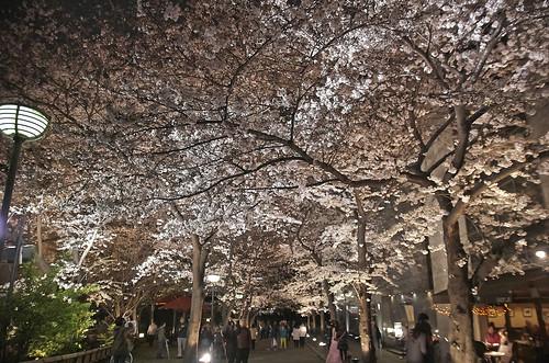 【写真】2014 桜 : 祇園白川/2020-09-13/IMGP5592