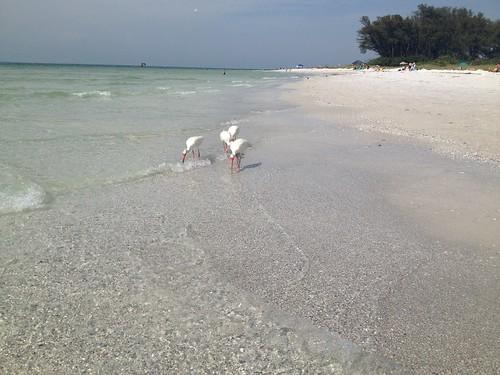 Florida May 2014