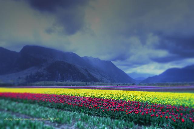 tulips forever