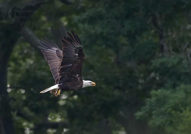 Eagle 7_13
